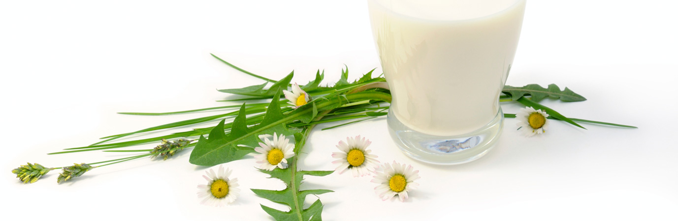 Bevanda a base di mandorla e agave